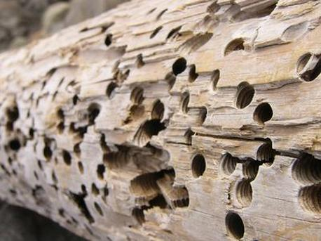 & Termite Treatment Options and Cost - The Termite Cure